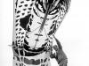 snake_kite