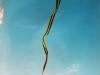 worlds-longest-kite