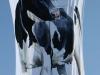antipodes-cow-kites-iii