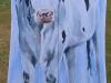 antipodes-kites-iv-tegenvoeters-kites-iv-witje-snowwhite